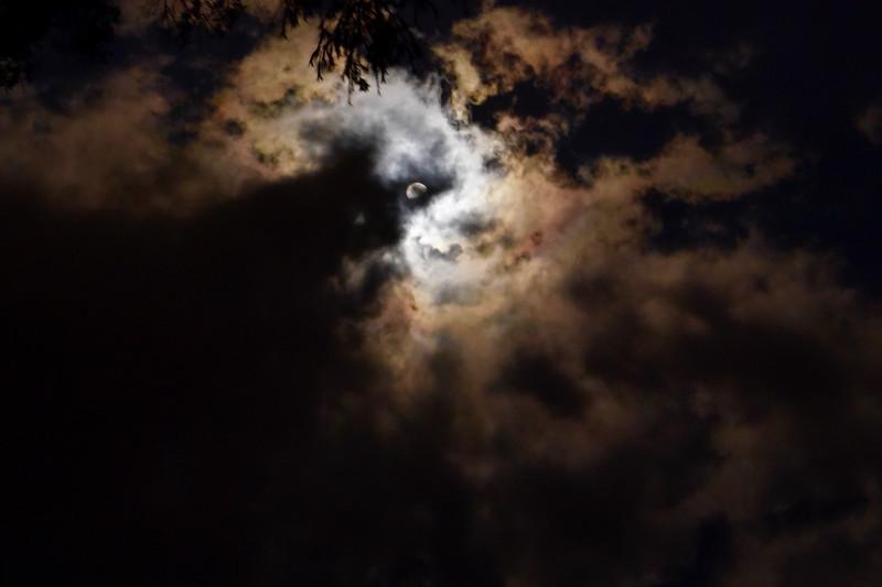 Moon Creature:18x12:300dpi.jpg