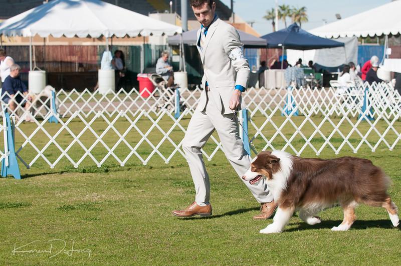20170205_Australian Shepherds_Lost Dutchman Kennel Club-13.jpg