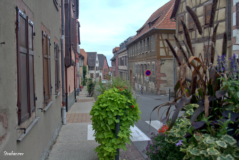 St Hippolyte, Alsace Wine Route, Alsace, France, 09/03/2018