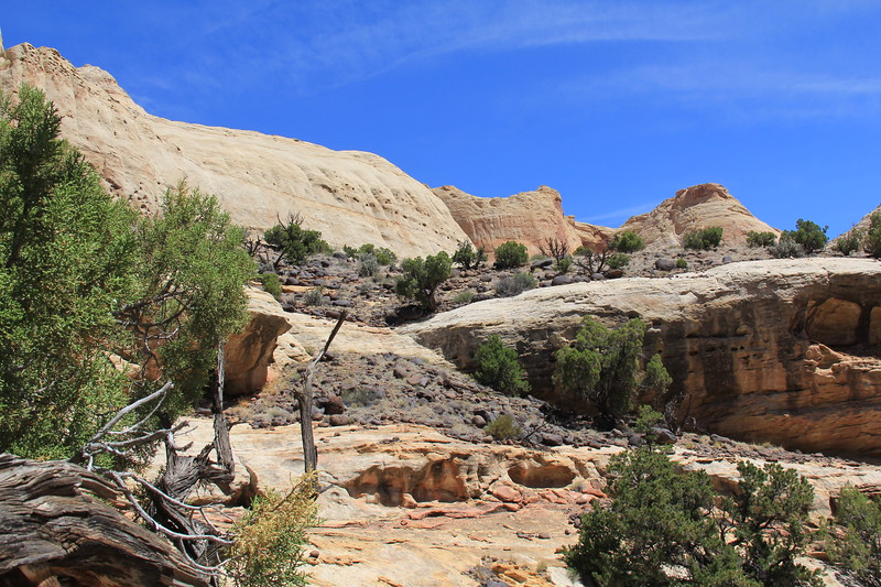 20170618-113 - Capitol Reef National Park - Hickman Bridge Trail.JPG