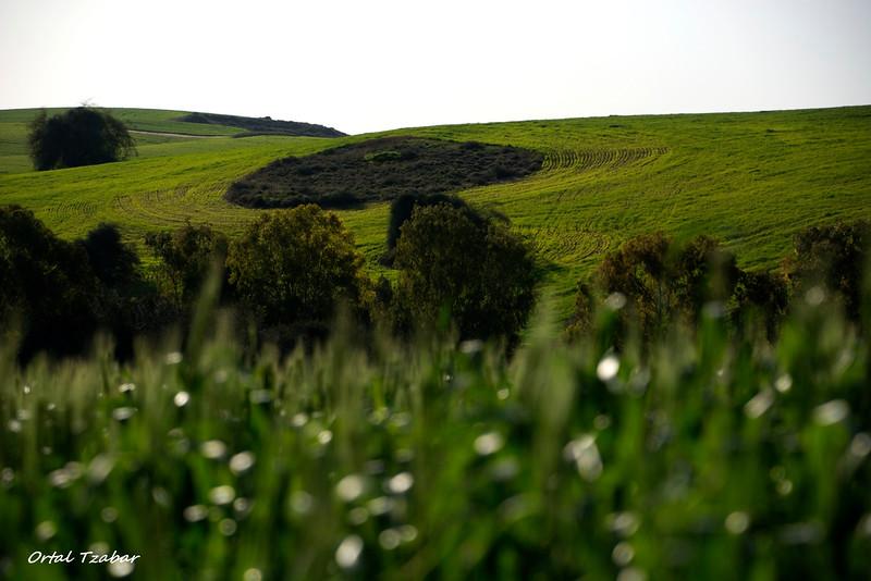 field6.jpg