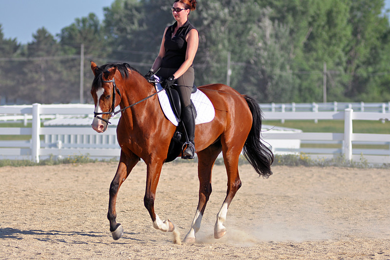 Horses July 2011 222a.jpg