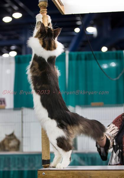 CatShow2014019_1.jpg
