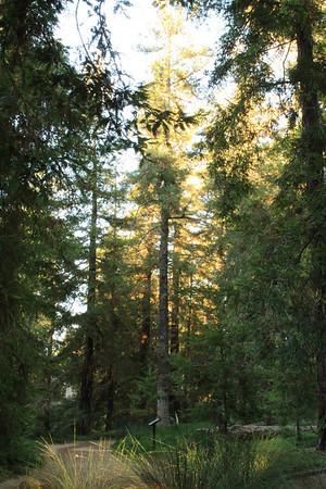 09.05.11 Redwood Grove