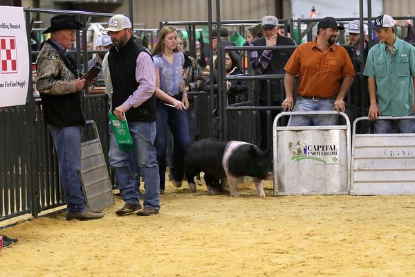Swine-Hampshires