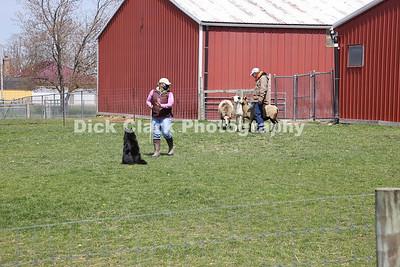 20210426 Monday Herding Trials