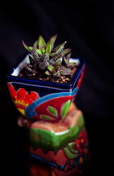 cactus-2297.jpg