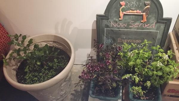 2014-10-23_Plants