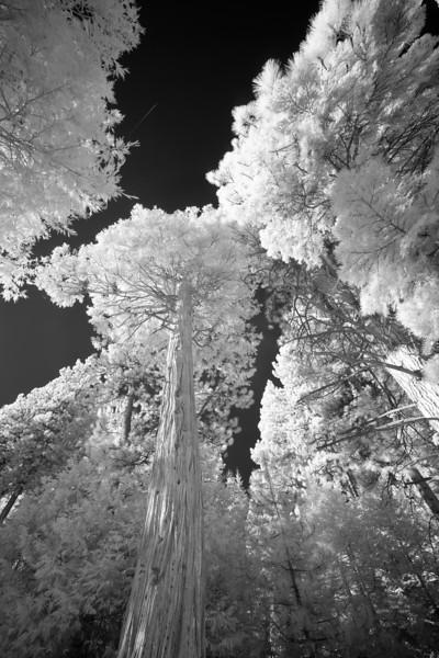 tahoe_565.jpg