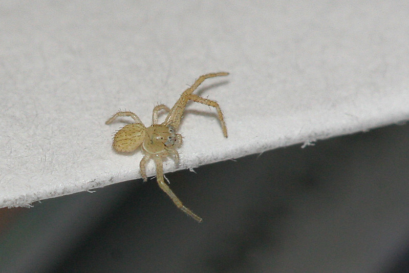 9335 Teeny Spider.jpg