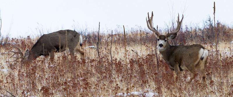Bighorns Dec 28