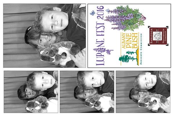 Lupine Fest at Pine Bush Preserve