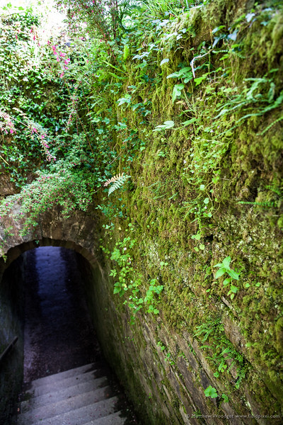 Woodget-140612-036--green, Moss, overgrown, Plants, stairs, tunnel.jpg