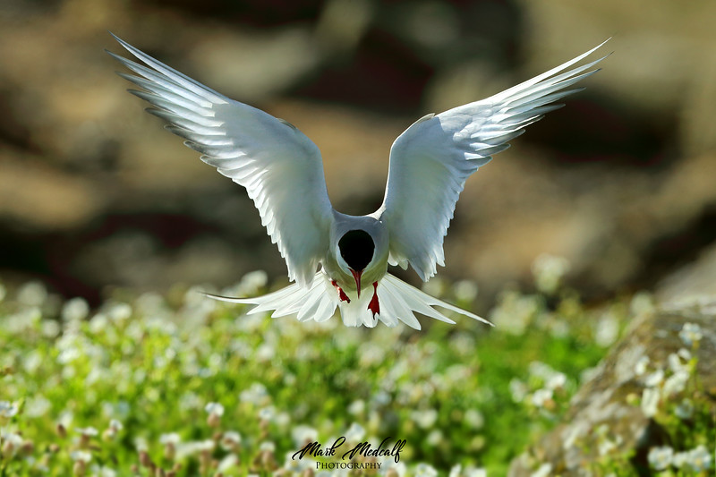 Hover Tern