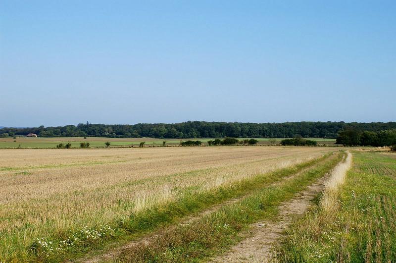 Trelde Næs syd for Skullebjergvej september 2005. Et af de få helt stille steder i vores støjplagede kommune.