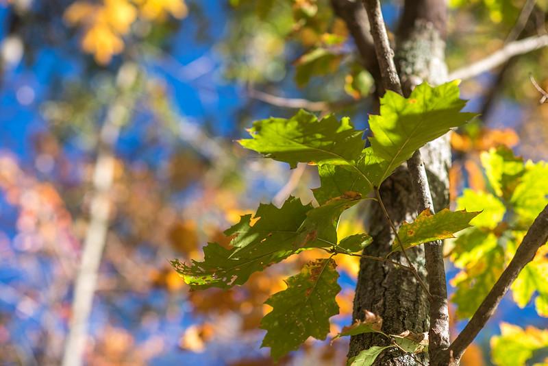 foliage-2014-77.jpg