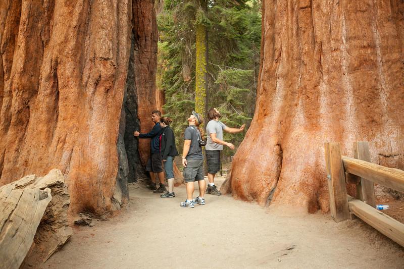 20140823_sequoia_0041.jpg