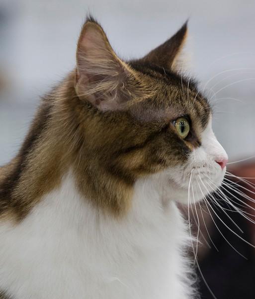 CatShow2014196.jpg