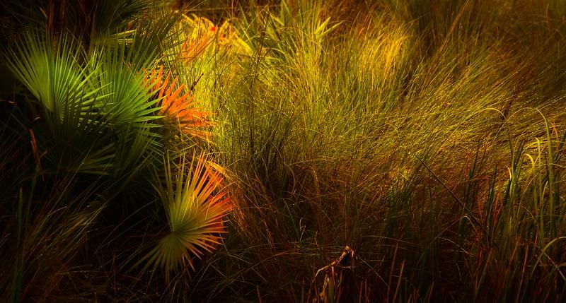 The Magic of Light-373.jpg