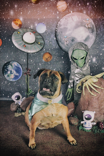 Dogs in Space Feb 9, 2020