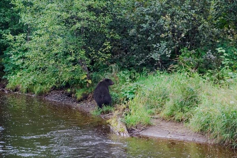 Brown Bear 2.jpg