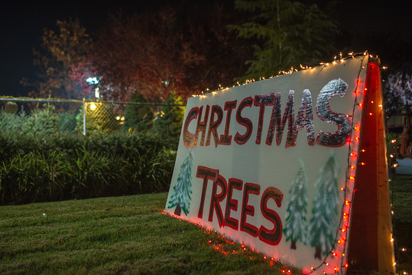 Christmas Tree Sale 2016