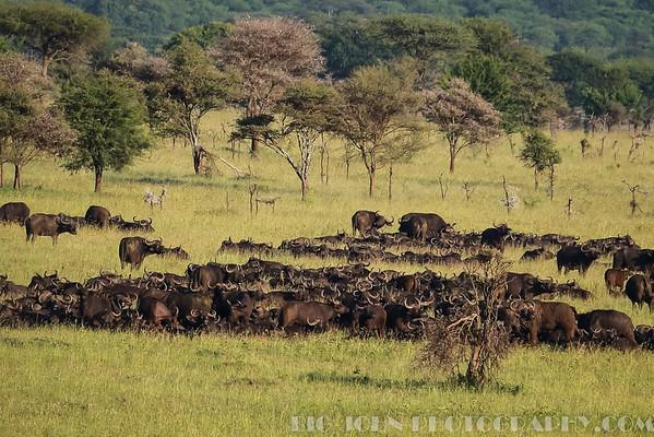 Serengeti Balloon Adventure 2014