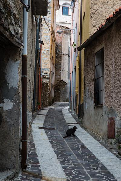 Il Gatto Nero di Bitti