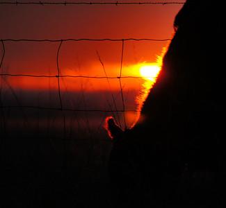Sunset ~ Jan. 4, 2012