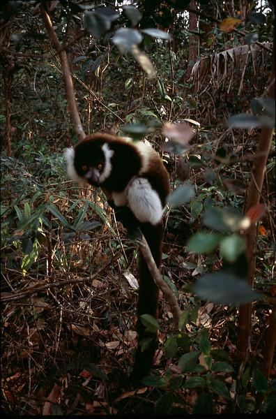 Madagasgar1_025.jpg