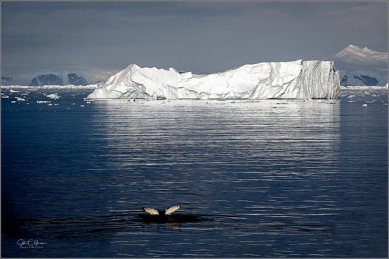 JZ7_9183 Whale Tail Iceberg LPr3W.jpg