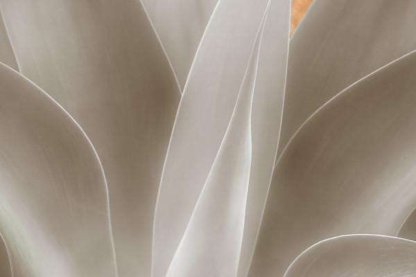 Botanical Renditions
