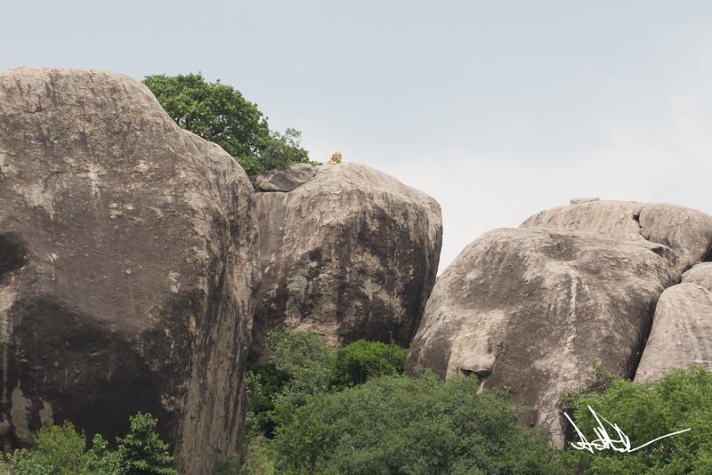 Lions Serengeti - S-4.jpg