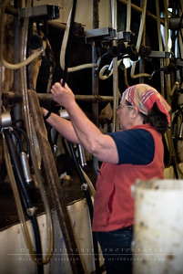 Suzanne is seen here sterilizing the cow's utters before attaching it to the milking machine.
