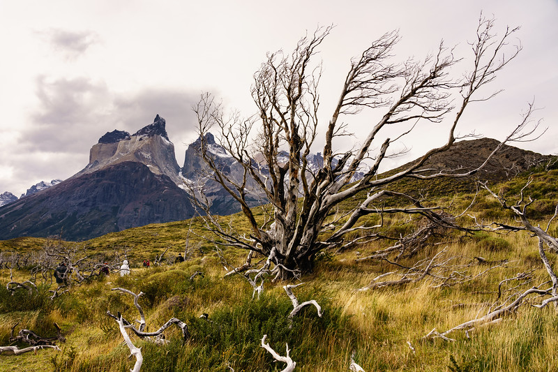 Patagonia 2018-02083.jpg