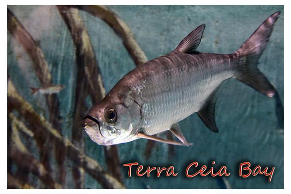 Terra Ceia Bay - post cards