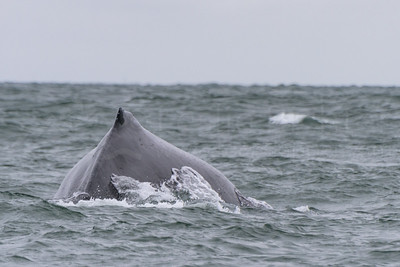 2 July 2017 Whales