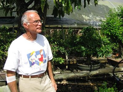 DRAGON TREE BONSAI - APRIL 2008