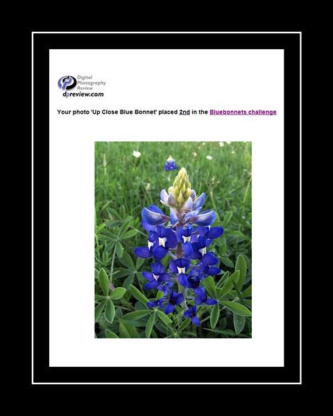 13-Blue Bonnets.jpg