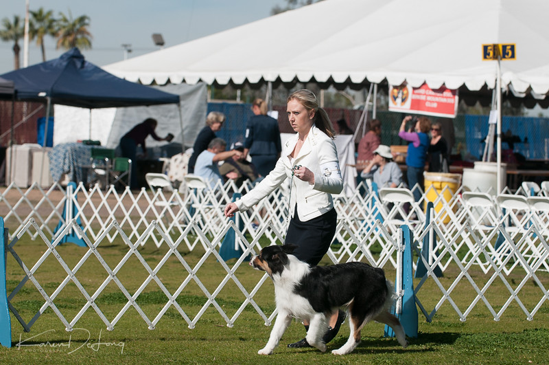 20170205_Australian Shepherds_Lost Dutchman Kennel Club-124.jpg