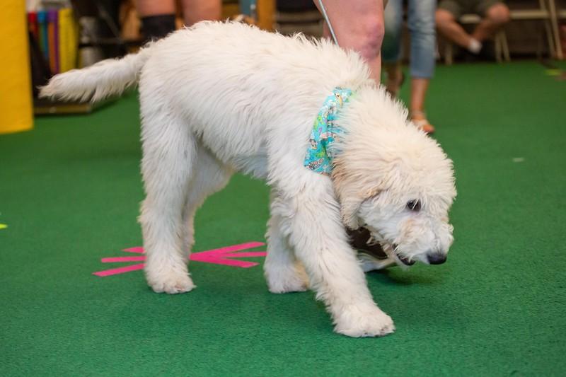 on Command dog Training June 2019-5106.jpg