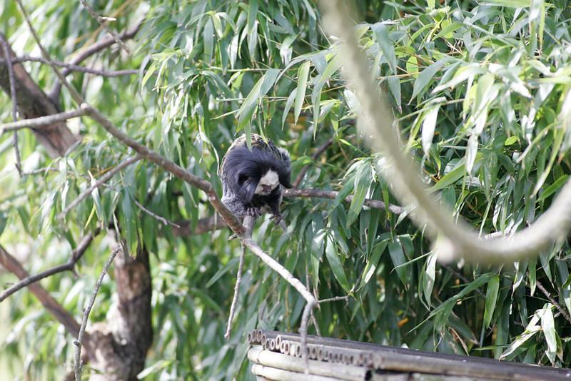 Newquay Zoo 089.jpg