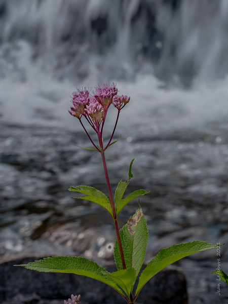 Splash of Color at the Falls