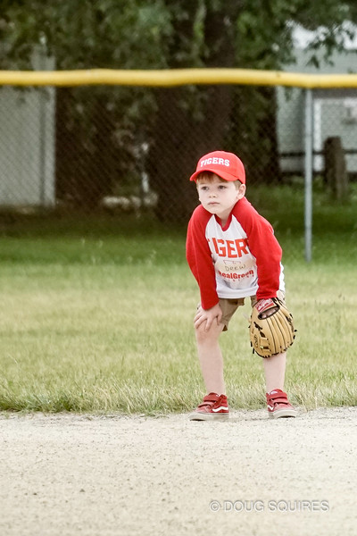 Tigers T-ball Game