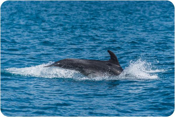 Sea Wildlife of New Zealand