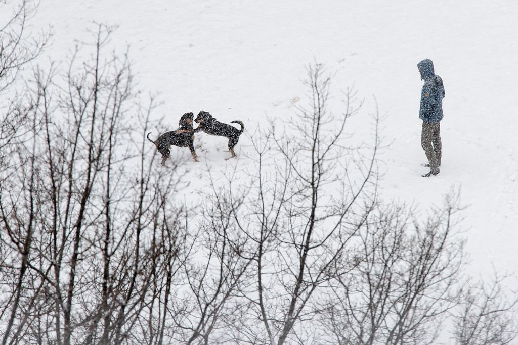 . A man watches as dogs play in a snow covered playground in Lower Manhattan, Saturday, Jan. 7, 2017, in New York. The Weather Service issued a winter weather advisory for New York City and the northern suburbs. Snow began falling from New York City and points east at mid-morning Saturday. (AP Photo/Mary Altaffer)
