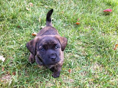 Dexter Puppy 2010