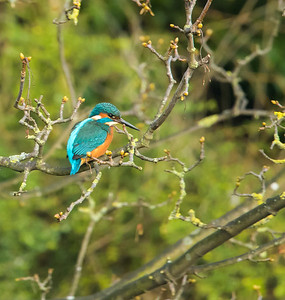 River Slea Wildlife