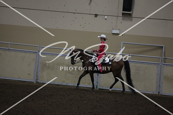Morgan Western Pleasure Jr Rider CHAMPIONSHIP