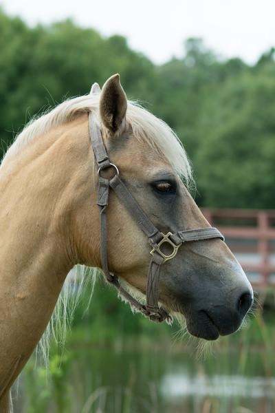 Horses_-62.JPG